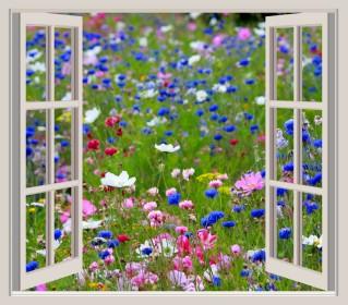 window-frame-view